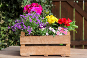 Flower Box Contest